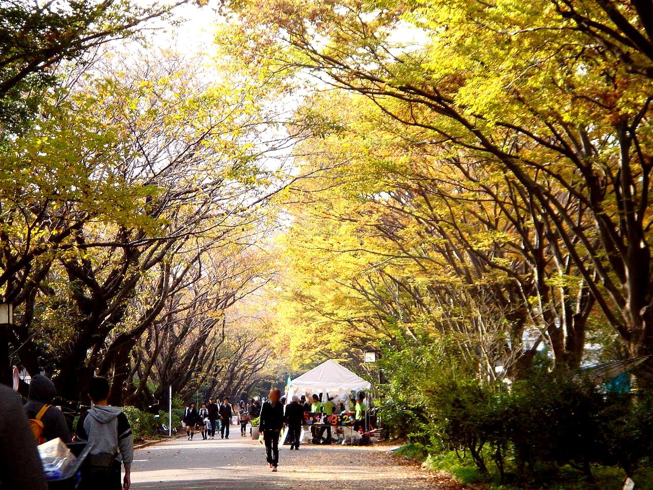 千葉大学偏差値(千葉大)2020・2021年 学部別一覧に関するページです。