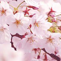あなたの春の居場所はどこですか?